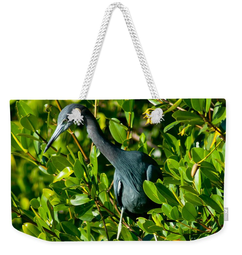 Tarpon Springs Weekender Tote Bag featuring the photograph Blue Heron In Mangroves by Stephen Whalen