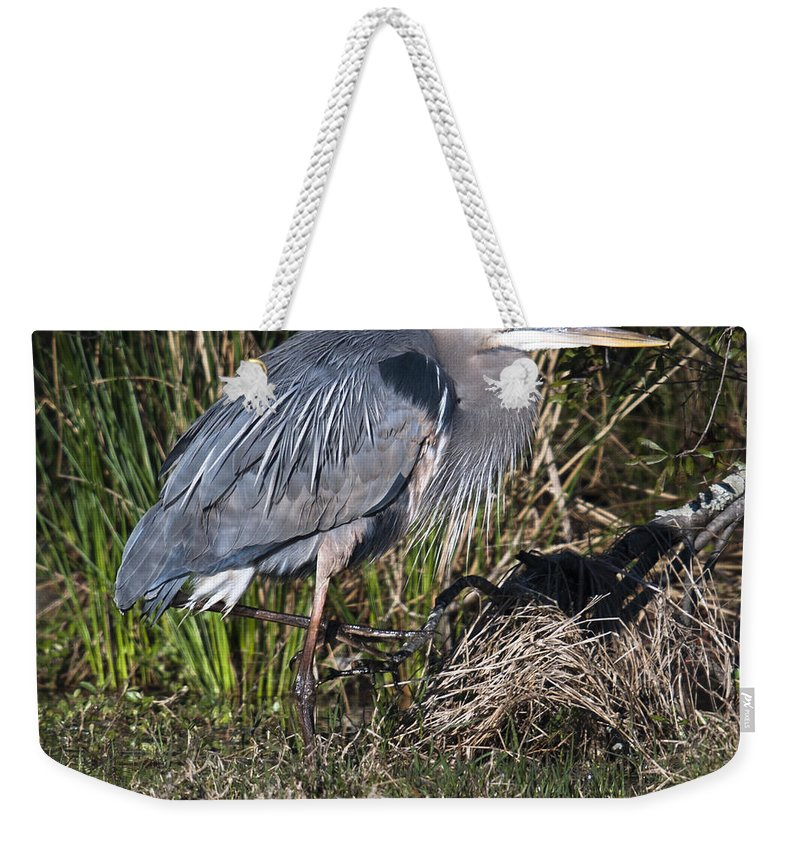 Blue Heron Weekender Tote Bag featuring the photograph Blue Heron On The Hunt by Dale Powell