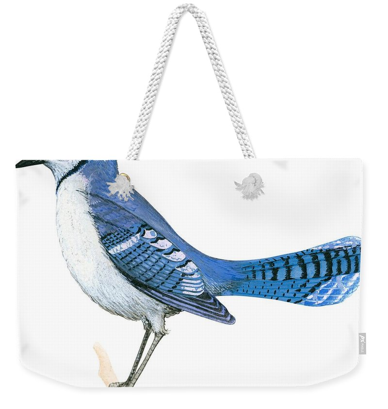 No People; Square Image; Side View; Full Length; White Background; One Animal; Wildlife; Close Up; Illustration And Painting; Zoology; Wing; Feather; Blue; Tail; Perching; Branch; Bird; Blue Jay; Cyanocitta Cristata Weekender Tote Bag featuring the drawing Blue Jay by Anonymous