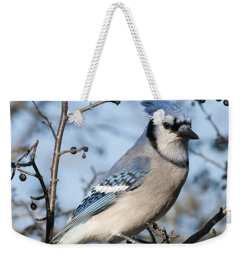 Festblues Weekender Tote Bag featuring the photograph Blue Jay.. by Nina Stavlund