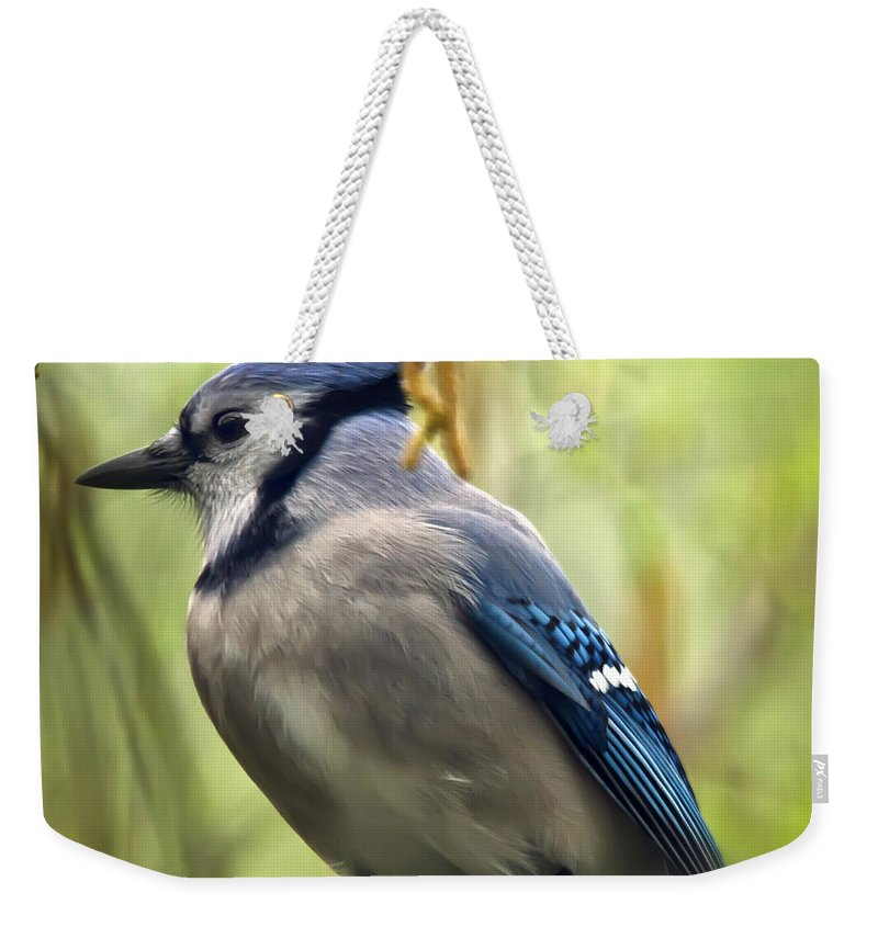 Bird Weekender Tote Bag featuring the photograph Blue Jay On A Misty Spring Day - Square Format by Lois Bryan