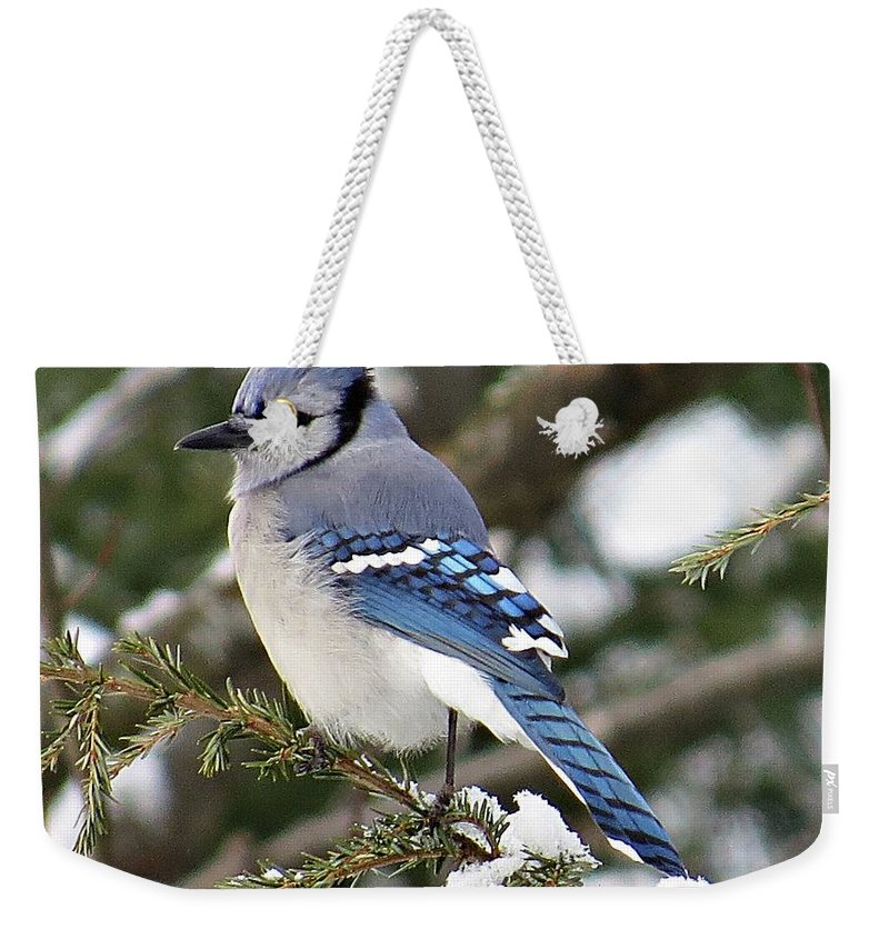 Blue Jay Weekender Tote Bag featuring the photograph Blue Jay On Hemlock by MTBobbins Photography