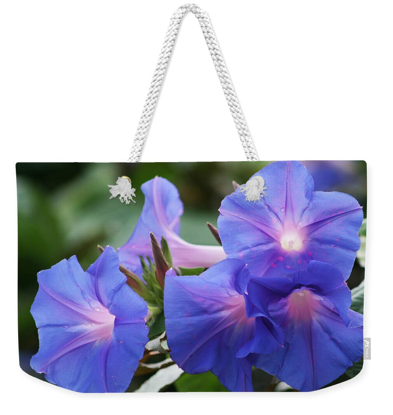 Convolvulaceae Weekender Tote Bag featuring the photograph Blue Morning Glory Wildflowers - Convolvulaceae by Kathy Clark