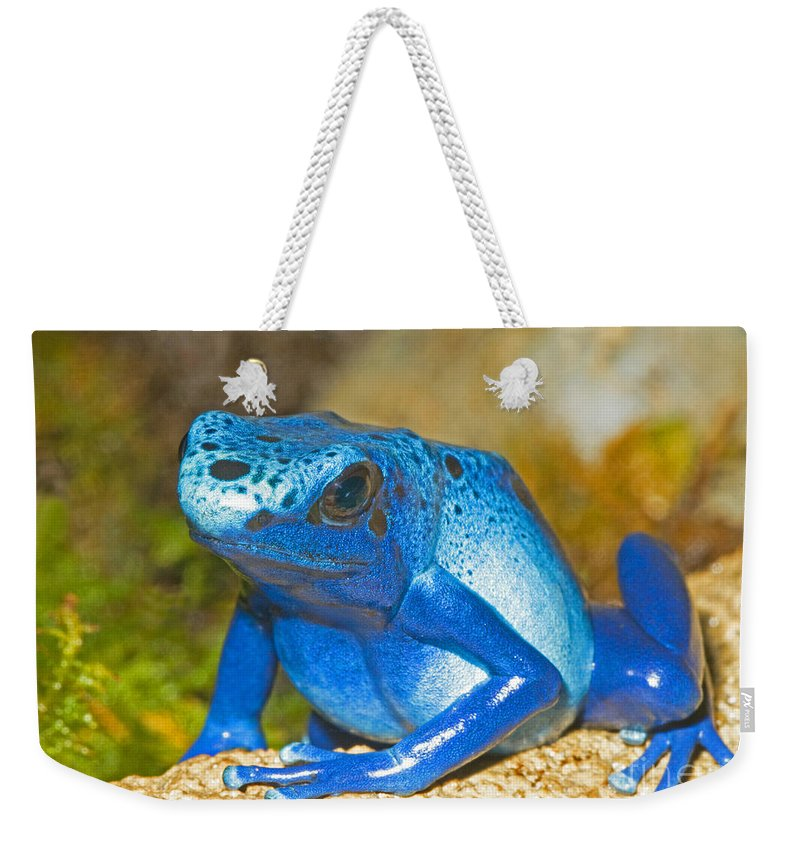 Dendrobates Azureus Weekender Tote Bag featuring the photograph Blue Poison Dart Frog by Millard H. Sharp