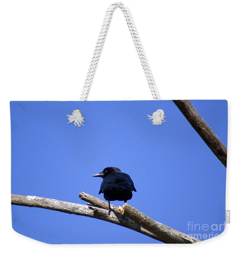 Crow Weekender Tote Bag featuring the photograph Blue View by Joe Geraci