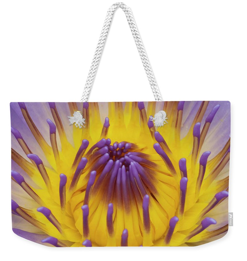 Water Lily Weekender Tote Bag featuring the photograph Blue Water Lily by Heiko Koehrer-Wagner