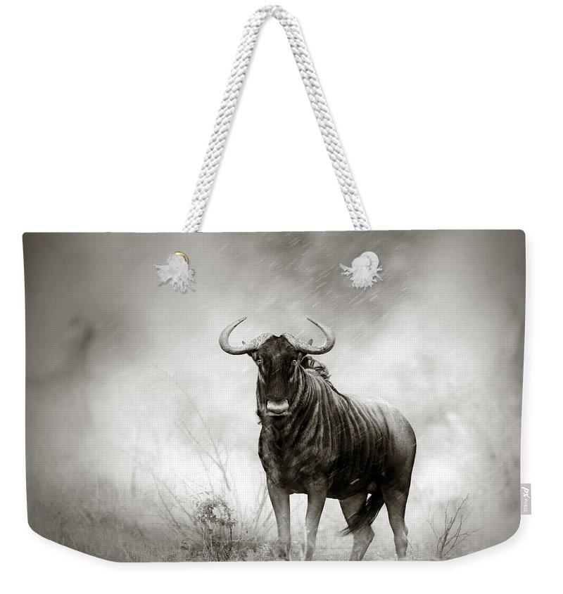 Designs Similar to Blue Wildebeest In Rainstorm