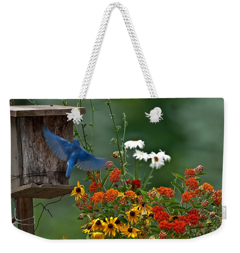 Bluebird Weekender Tote Bag featuring the photograph Bluebird And Colorful Flowers by Randall Branham