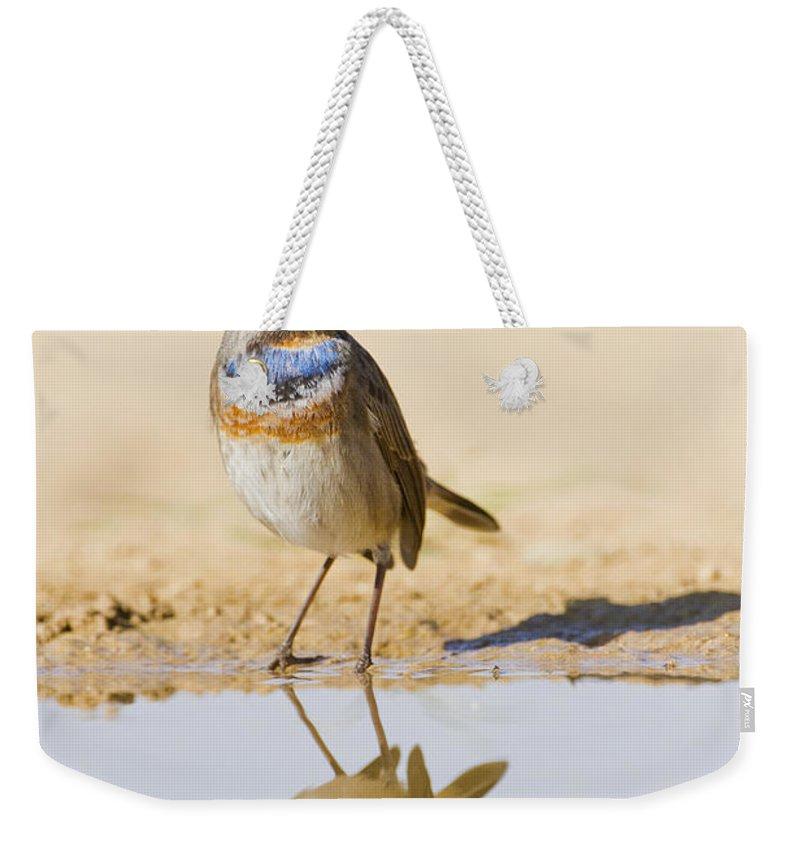 Bluethroat Weekender Tote Bag featuring the photograph Bluethroat Luscinia Svecica by Eyal Bartov