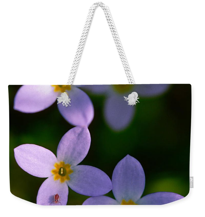 Bluet Weekender Tote Bag featuring the photograph Bluets With Aphid by Marty Saccone