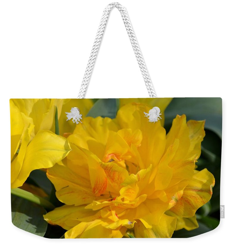 Blushing Yellow Weekender Tote Bag featuring the photograph Blushing Yellow by Maria Urso