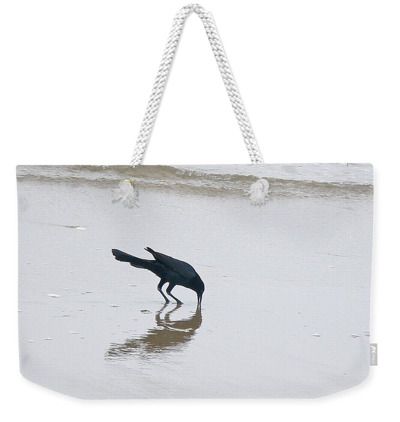Grackle Weekender Tote Bag featuring the photograph Boat-tailed Grackle - Quiscalus Major - In Surf by Mother Nature