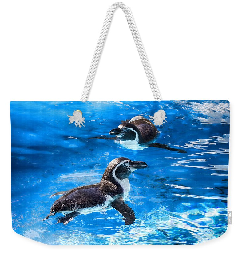 Maui Penguins Weekender Tote Bag featuring the photograph Bobbing Time by Douglas Barnard