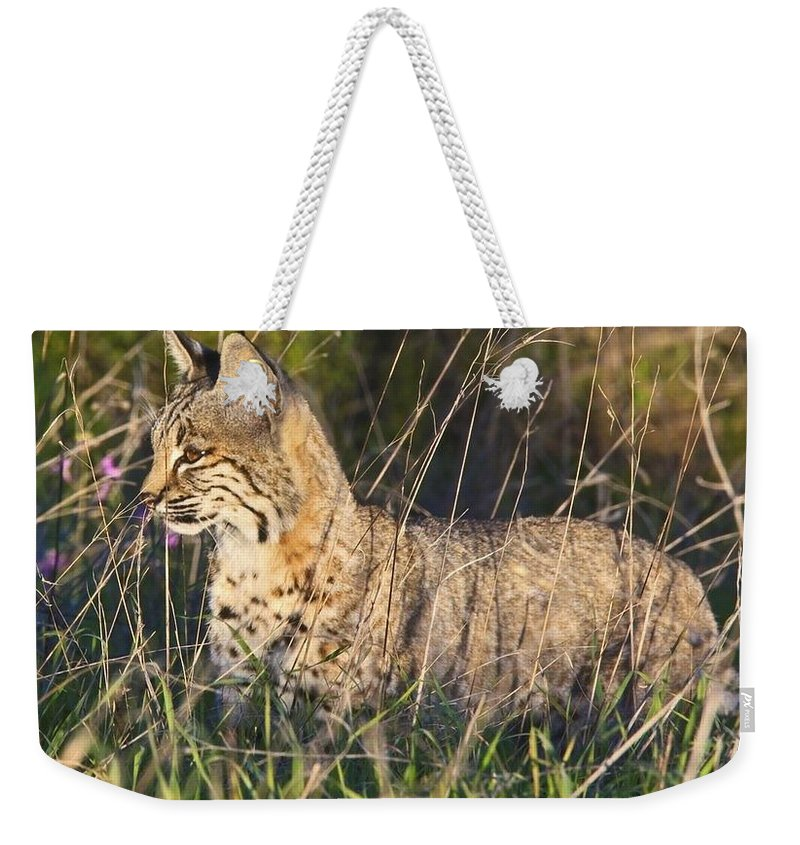 Bobcat Weekender Tote Bag featuring the photograph Bobcat In The Grass by Beth Sargent