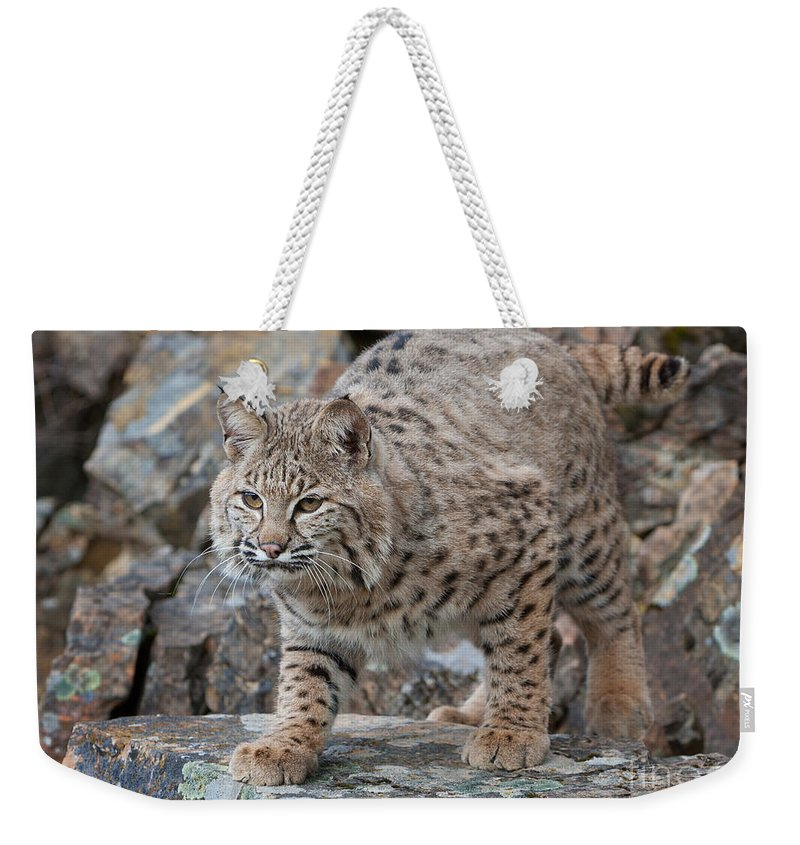 Bobcat Weekender Tote Bag featuring the photograph Bobcat On Rock by Jerry Fornarotto