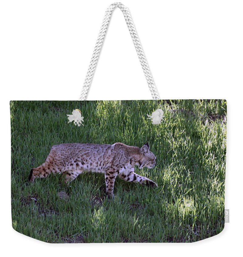 Bobcat Weekender Tote Bag featuring the photograph Bobcat On The Move by Shoal Hollingsworth
