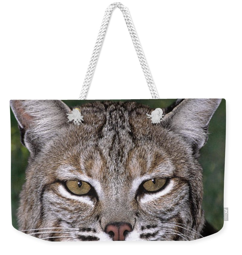 Bobcat Weekender Tote Bag featuring the photograph Bobcat Portrait Wildlife Rescue by Dave Welling