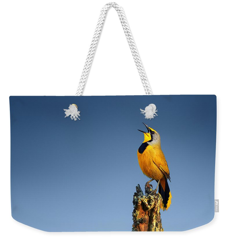 Bokmakierie Weekender Tote Bag featuring the photograph Bokmakierie Bird Calling by Johan Swanepoel