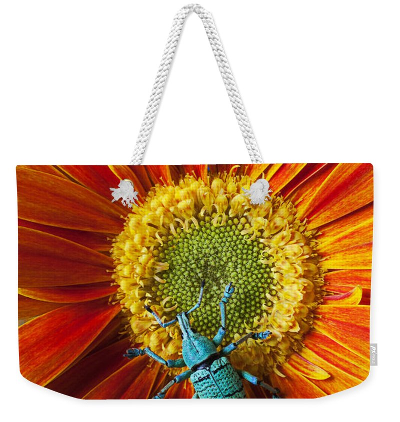 Boll Weevil Omum Weekender Tote Bag featuring the photograph Boll Weevil On Mum by Garry Gay