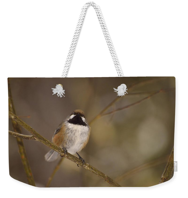 Boreal Chickadee Weekender Tote Bag featuring the photograph Bonding Boreal by Joshua McCullough