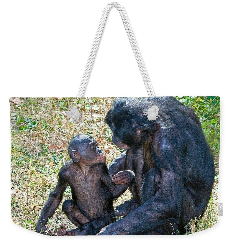 Bonobo Weekender Tote Bag featuring the photograph Bonobo Adult Talking To Juvenile by Millard H. Sharp