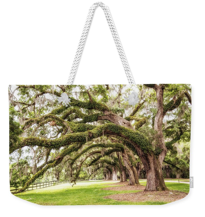 Trees Weekender Tote Bag featuring the photograph Boones Oaks by Karol Livote