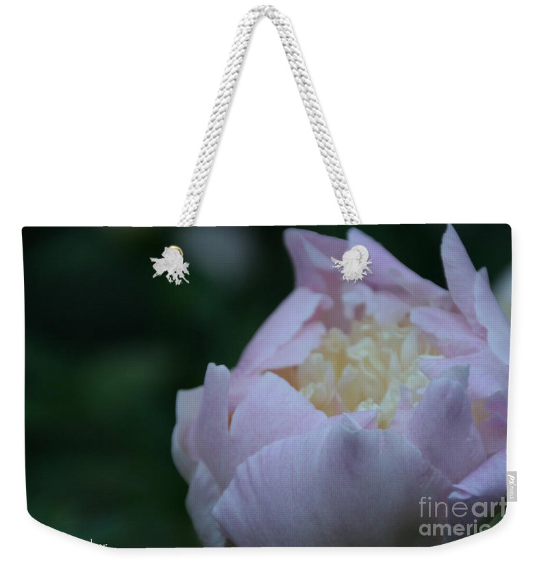 Flower Weekender Tote Bag featuring the photograph Bordering On Pink by Susan Herber