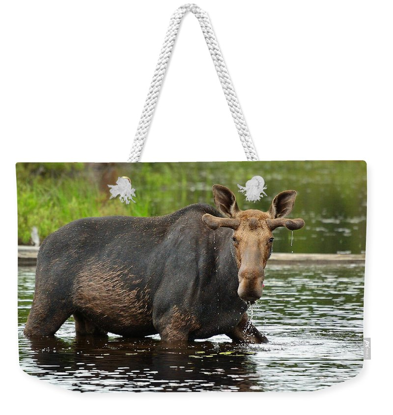 Alces Alces Weekender Tote Bag featuring the photograph Boreal King by Joshua McCullough