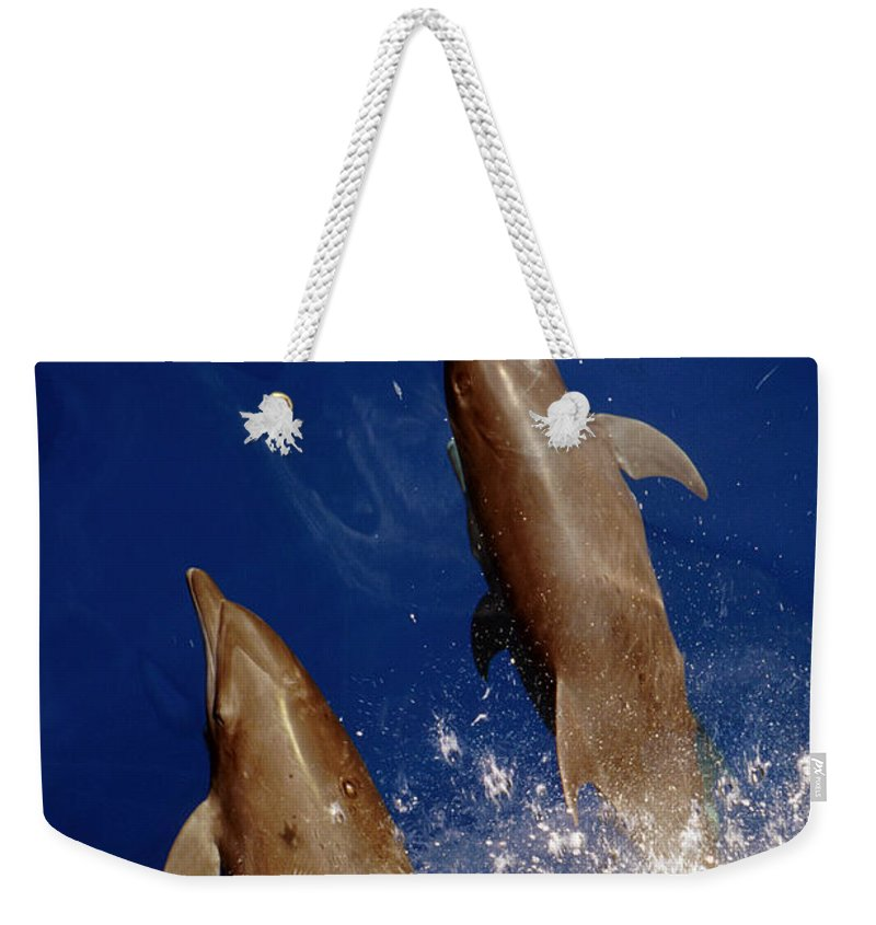 No People; Vertical; Outdoors; Day; Overhead View; Two Animals; Nature; Wildlife; Sunlight; Idyllic; Sea; Wave; Water; Bottlenose Dolphin; Tursiops Truncatus; Sealife Weekender Tote Bag featuring the photograph Bottlenose Dolphins Tursiops Truncatus by Anonymous