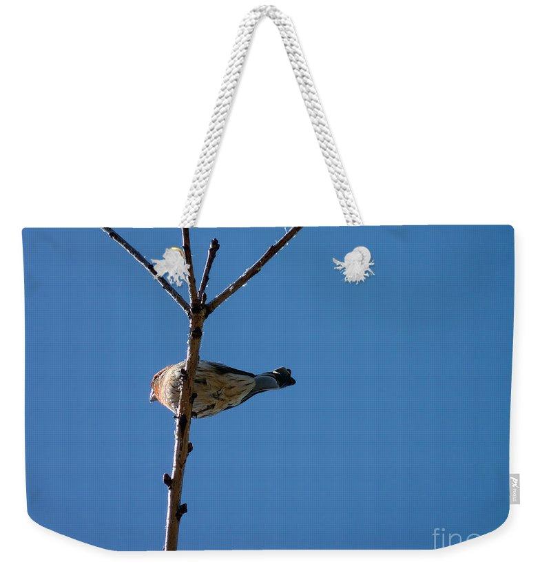Bird Weekender Tote Bag featuring the photograph Bottoms Up by Meghan at FireBonnet Art