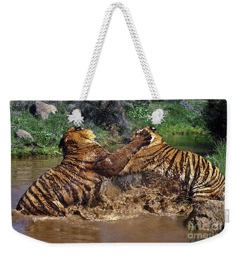 Bengal Tigers Weekender Tote Bag featuring the photograph Boxing Bengal Tigers Wildlife Rescue by Dave Welling
