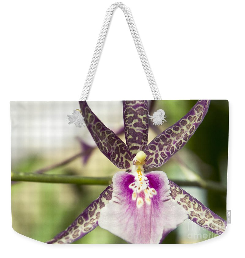 Hawaii Weekender Tote Bag featuring the photograph Bratonia Miltassia Charles M Fitch Izumi Orchid Hawaii by Sharon Mau