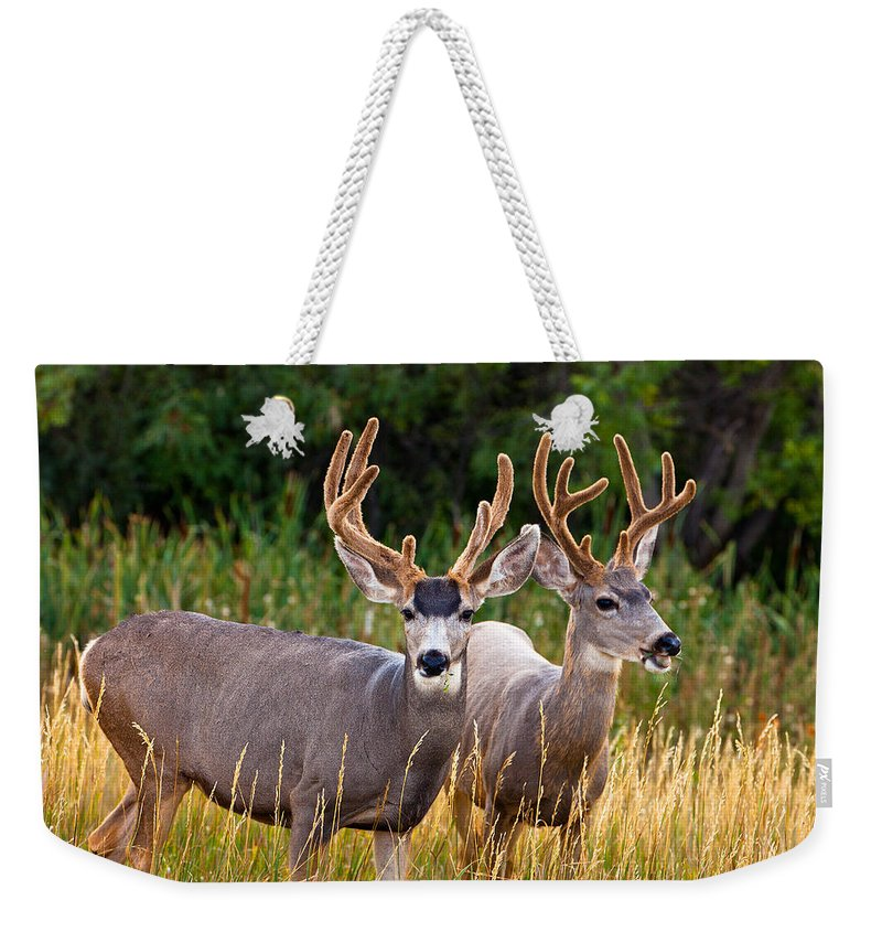 Morning Weekender Tote Bag featuring the photograph Breakfast With Friends by Darren White