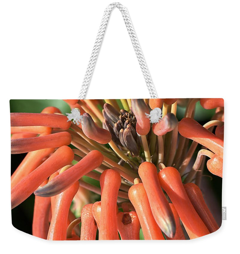 Cactus Weekender Tote Bag featuring the photograph Breaking Out by Joy Watson