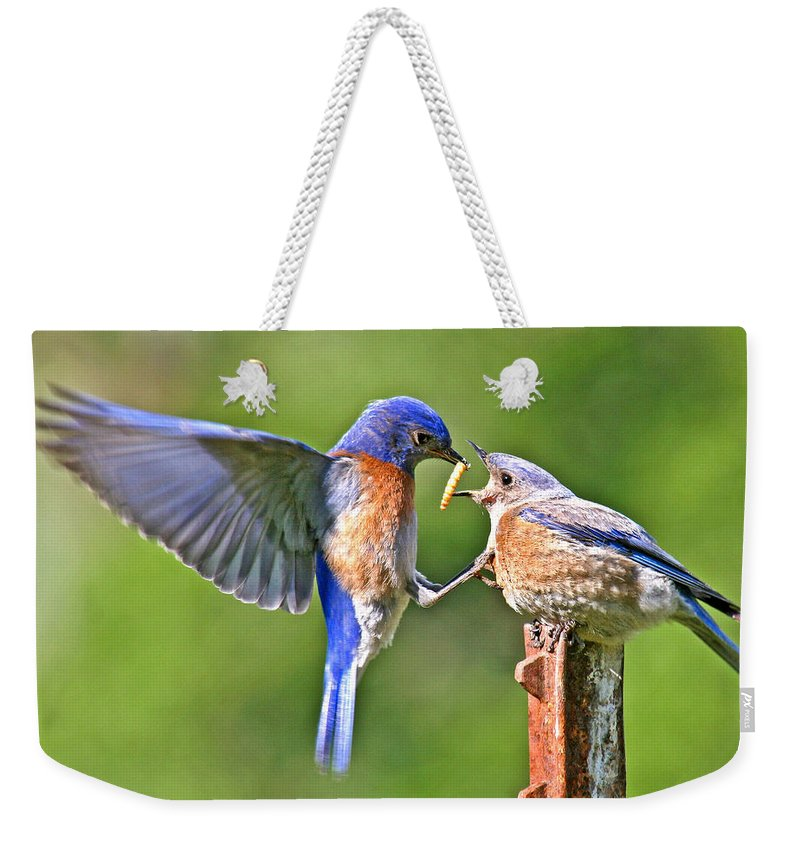 - Animals Weekender Tote Bag featuring the photograph Breast Feeding. by Jean Noren