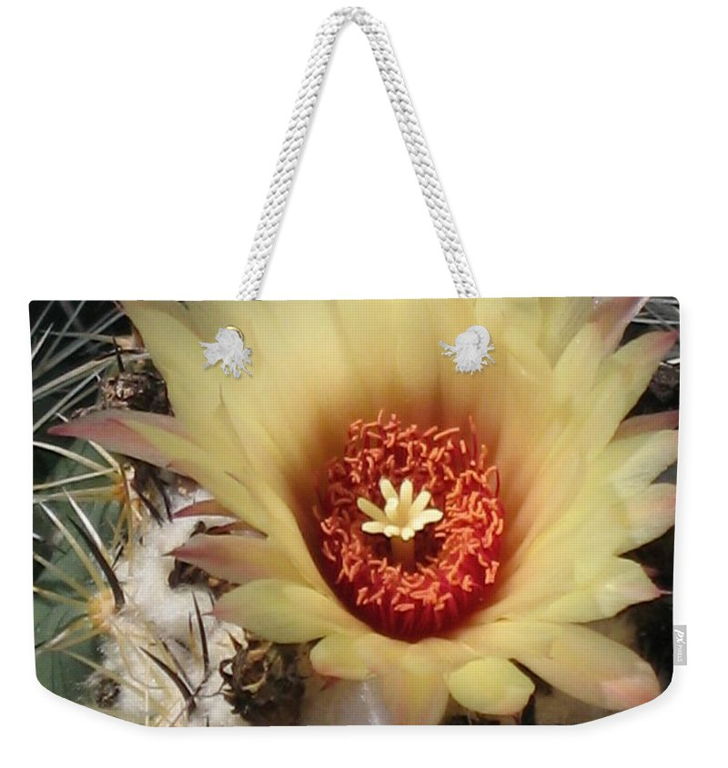 Cactus Weekender Tote Bag featuring the photograph Bright And Beauty by Christiane Schulze Art And Photography