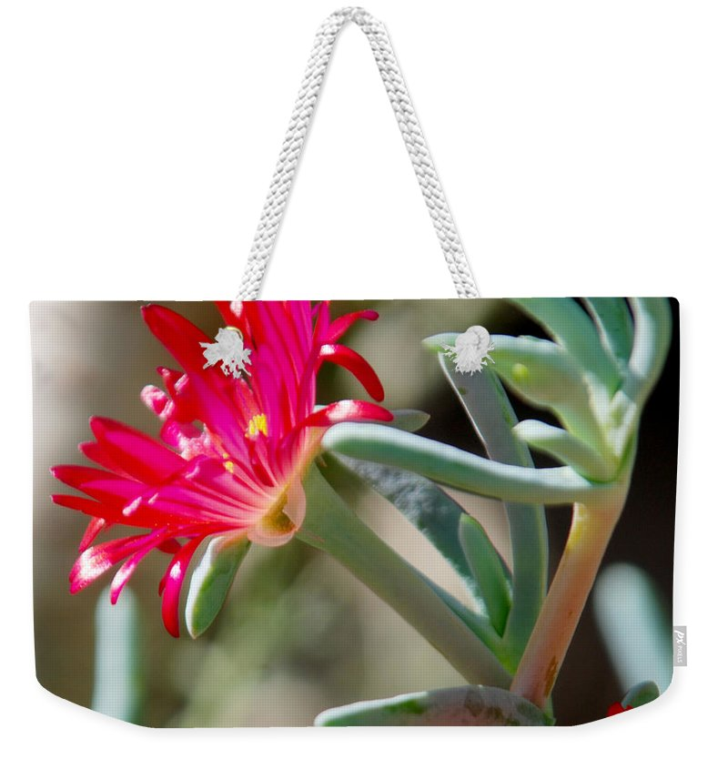 Las Palmas Weekender Tote Bag featuring the photograph Bright Pink Flower by Tracy Winter
