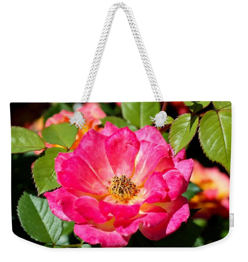 Bright Pink Rose Weekender Tote Bag featuring the photograph Bright Pink Rose by Cynthia Woods