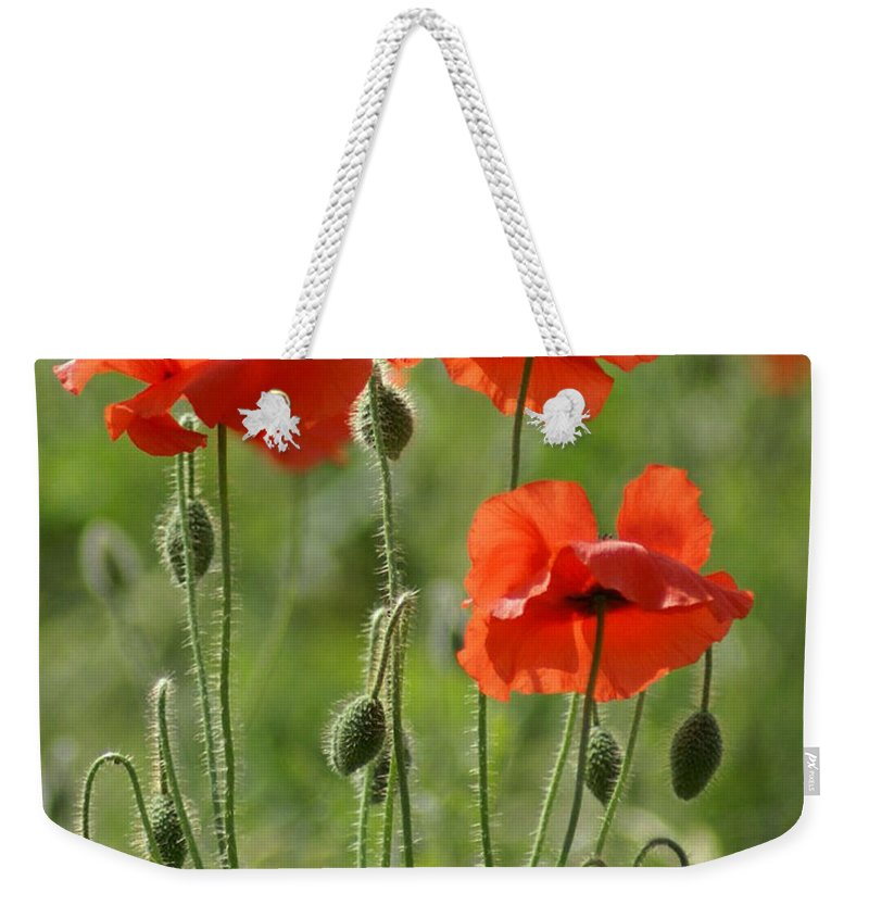 Poppies Weekender Tote Bag featuring the photograph Bright Poppies 1 by Carol Lynch