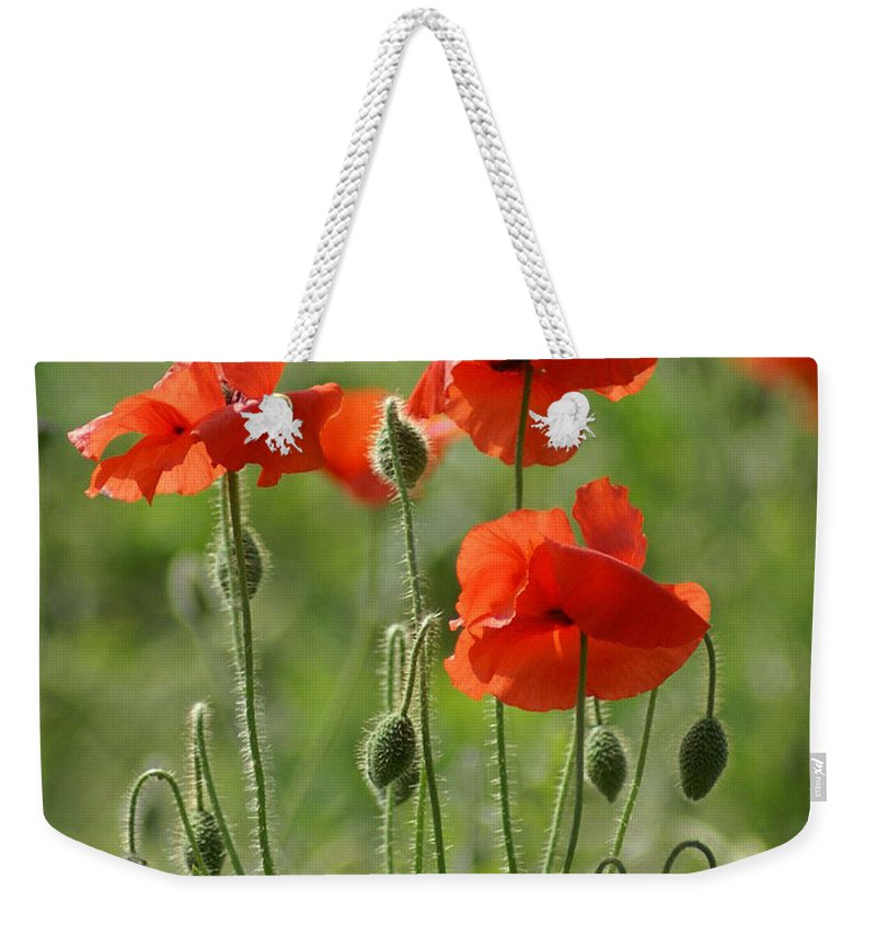 Poppies Weekender Tote Bag featuring the photograph Bright Poppies 2 by Carol Lynch