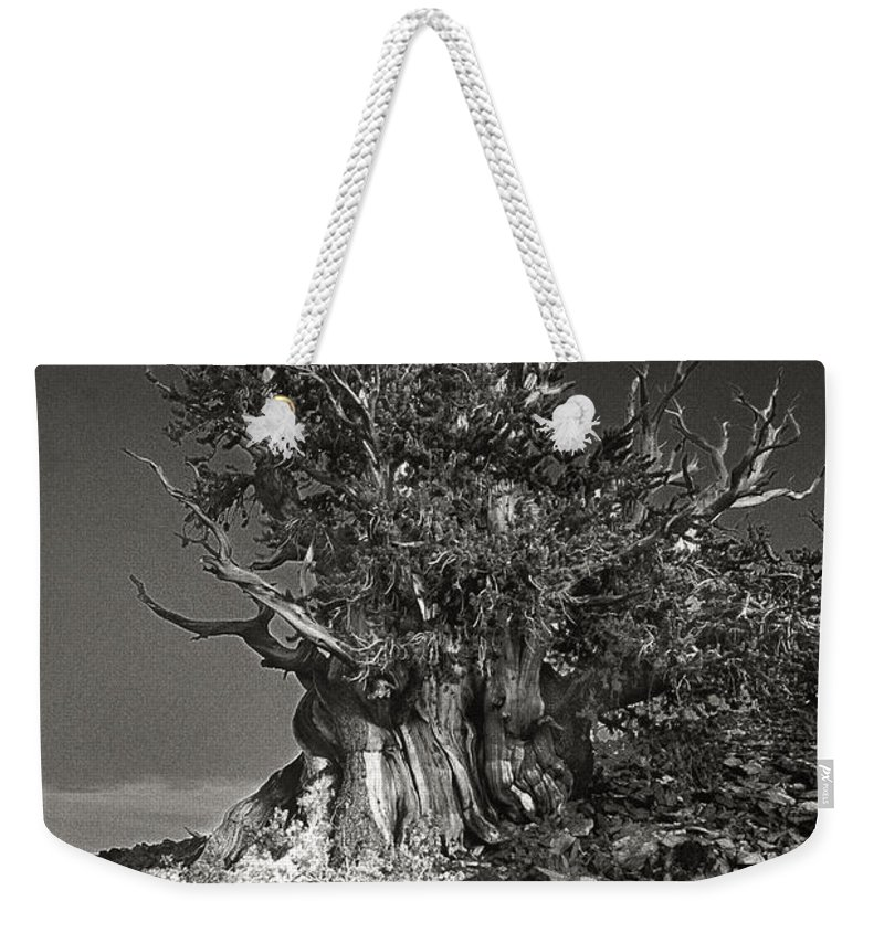 North America Weekender Tote Bag featuring the photograph Bristlecone And Wildflowers In Black And White by Dave Welling