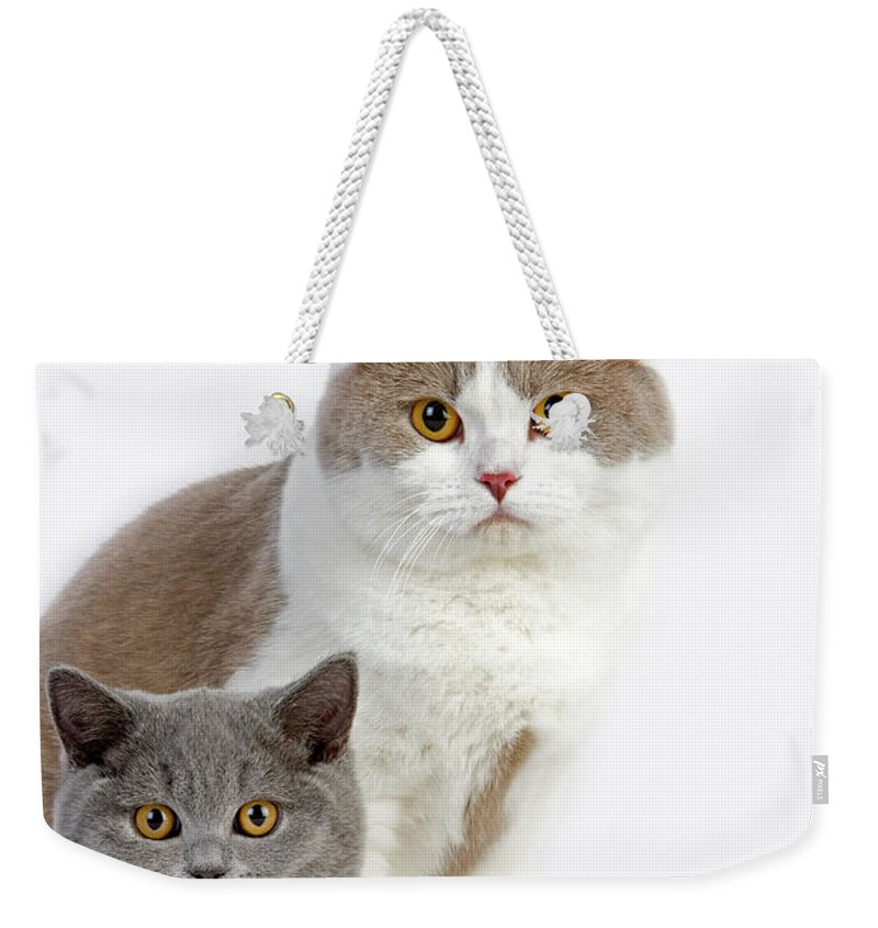 Adult Weekender Tote Bag featuring the photograph British Shorthair Lilac Et Blanc by Gerard Lacz