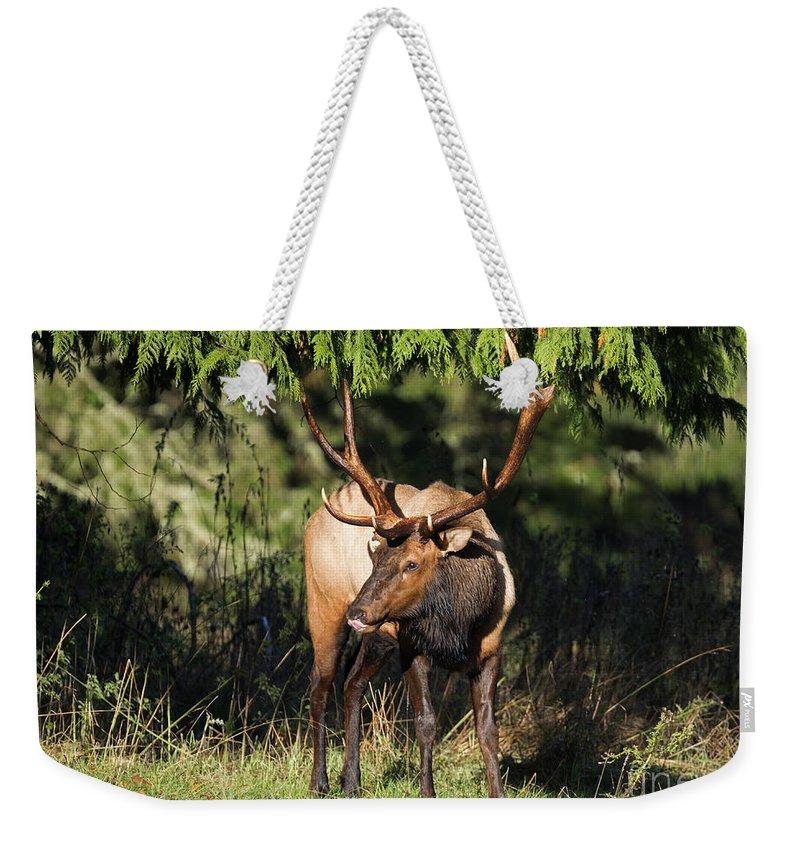 Elk Weekender Tote Bag featuring the photograph Broken Rack by Mike Dawson
