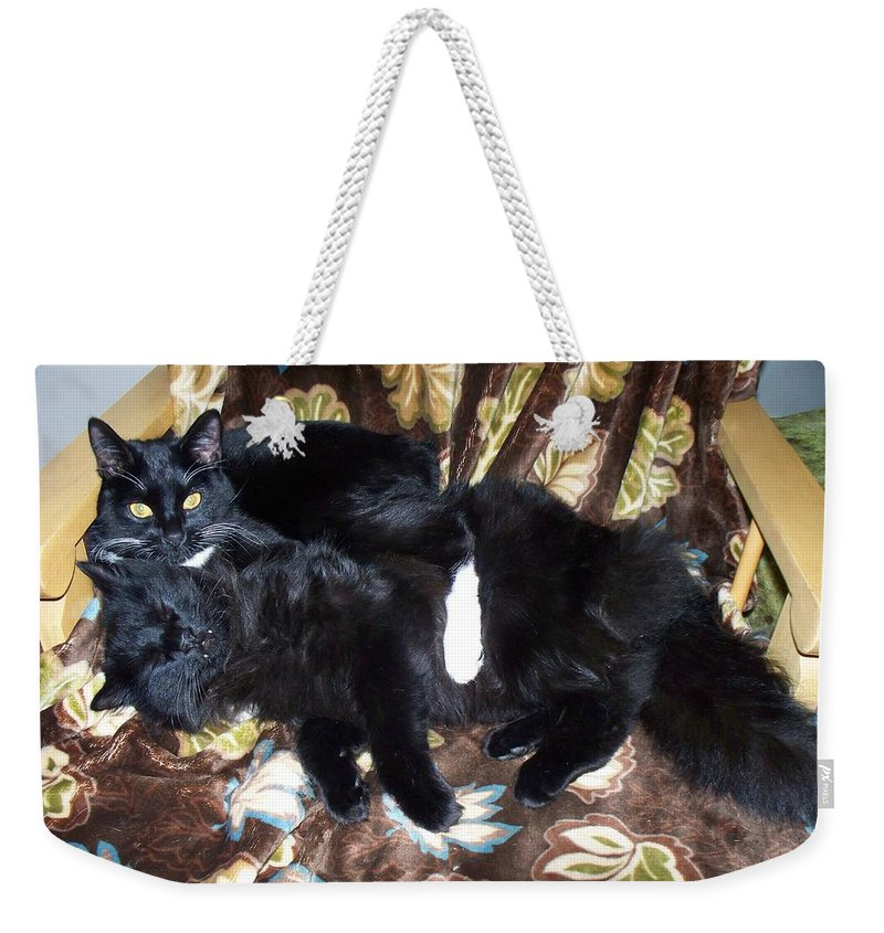 Cats Weekender Tote Bag featuring the photograph Brotherly Love by Lisa Wormell