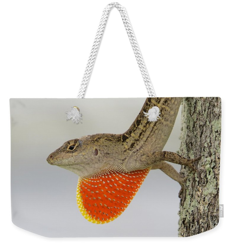 Brown Anole Weekender Tote Bag featuring the photograph Brown Anole II by Zina Stromberg
