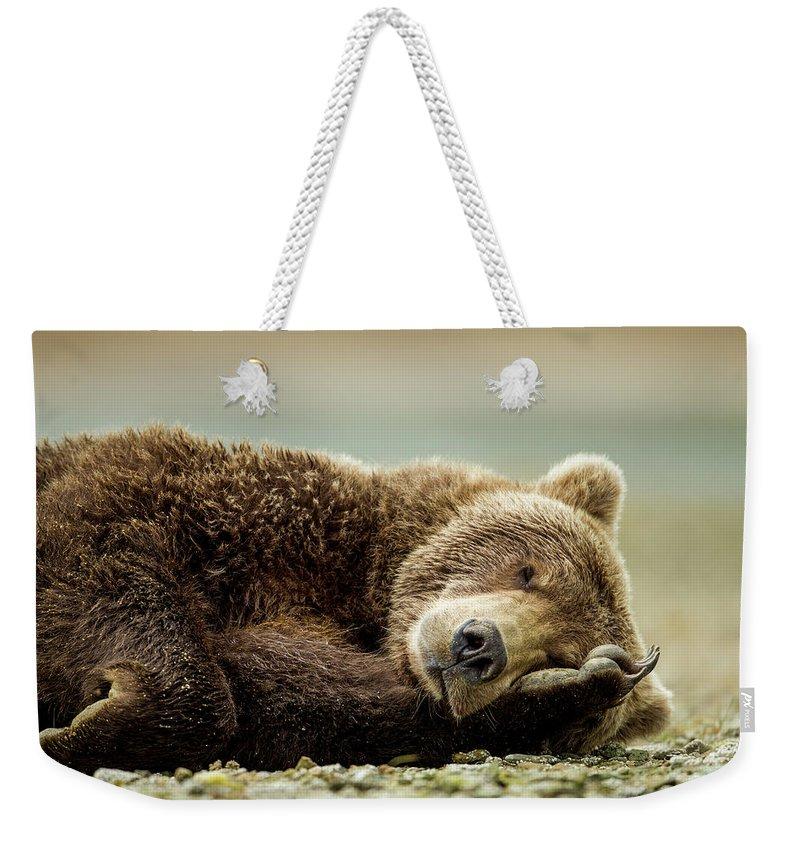 Brown Bear Weekender Tote Bag featuring the photograph Brown Bear, Katmai National Park, Alaska by Paul Souders
