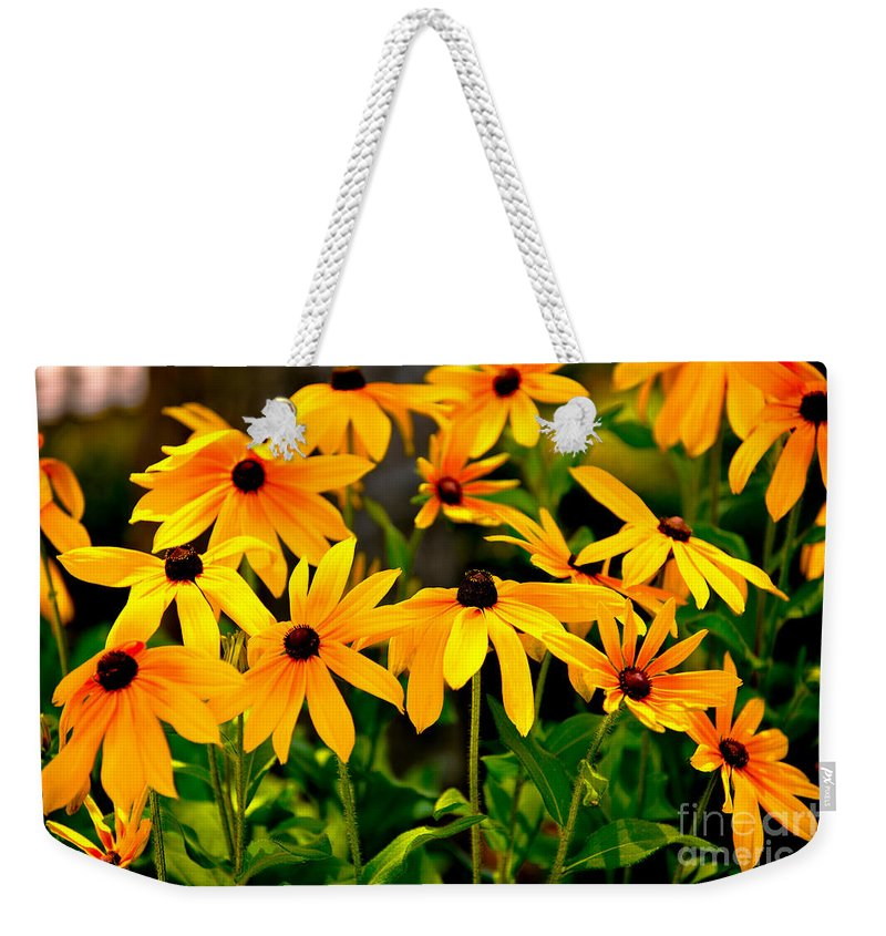 Rudbeckia Hirta Weekender Tote Bag featuring the photograph Brown Eyed Susan by Dale Powell