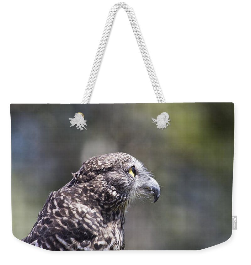Australian Goshawk Weekender Tote Bag featuring the photograph Brown Goshawk V2 by Douglas Barnard