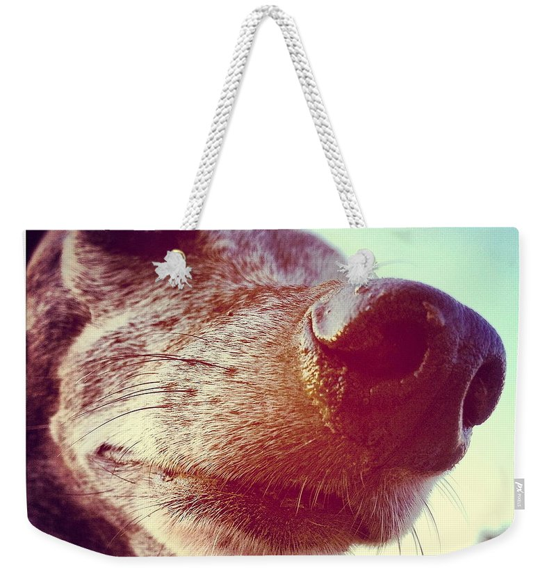 Nose Weekender Tote Bag featuring the photograph Brown Noser by Angela Rath