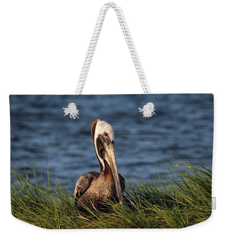 Brown Pelican Weekender Tote Bag featuring the photograph Brown Pelican Fledgling by David Kay